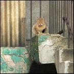 "Foto Fanka ""architektura z kotkiem"" (2011-04-10 19:22:34) komentarzy: 1, ostatni: ++/"