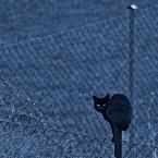 """Marze Na """"siedzial...kot na slupku na lewym..."""" (2011-04-19 02:14:59) komentarzy: 60, ostatni: bdb"""