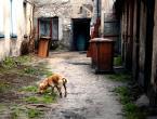 """asiasido """"bramowo - podwórkowo z psem"""" (2011-04-19 18:52:26) komentarzy: 4, ostatni: Łubie takie podwórkowe"""