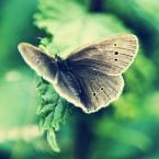 """Jowitaa """"Wiosna!"""" (2011-04-20 21:33:02) komentarzy: 19, ostatni: ;)"""