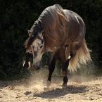 """Ronceval """"Saper myli się tylko raz"""" (2011-04-22 21:11:17) komentarzy: 25, ostatni: super"""