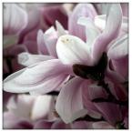 """inezz-ka """"wiosenne impresje 2"""" (2011-04-25 13:02:06) komentarzy: 0, ostatni:"""