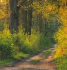 """pawello91 """"Wiosna w lesie"""" (2011-04-25 19:17:12) komentarzy: 4, ostatni: db./"""