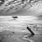 """klimat """"Mustang"""" (2011-04-25 20:58:27) komentarzy: 10, ostatni: bez właściciela (mesteno). słońce prawie w zenicie i ... __http://www.youtube.com/watch?v=Iyu3zbXIkG8"""