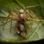 """BigBadWolf """"mucha na dziko"""" (2011-04-28 14:24:37) komentarzy: 5, ostatni: Ciekawe czy miał talon na muchę ? :) Dobre!"""