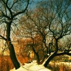 """webmeteoo """"Drzewce"""" (2011-04-30 19:28:56) komentarzy: 7, ostatni: taka klisza,kupilem 3 rolki ,tez jestem z niej zadowolony,pzdr"""