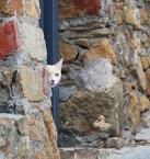 "asiasido ""kot toskański"" (2011-05-13 19:31:26) komentarzy: 8, ostatni: ..;))"
