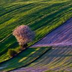 """cocacola """"wiosna na polach..."""" (2011-05-16 19:54:56) komentarzy: 58, ostatni: ŁADNIE ;)"""