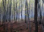 """opty49 """"W Sierbieszowskim Parku Krajobrazowym"""" (2011-05-19 17:05:34) komentarzy: 0, ostatni:"""