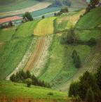 """asiasido """"kolorowe pola"""" (2011-05-30 10:24:36) komentarzy: 6, ostatni: jeszcze przyjdzie czas na Białą Damę, dajmy jej odpocząć :)"""
