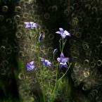 "Marta Posyłek """" (2011-06-01 09:56:51) komentarzy: 3, ostatni: :)))"