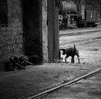 """JarekZ-68 """"... pies kolejarza ..."""" (2011-06-04 23:02:16) komentarzy: 18, ostatni: zdziwiłbyś się Iskier jaki ten psiak jest wybredny :))) Tam każdy go karmi ;)"""