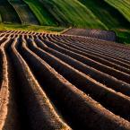 """cocacola """"czerwcowe pola..."""" (2011-06-07 18:42:26) komentarzy: 105, ostatni: gratulacje :))"""