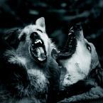 """Lotharn """"*** szyderstwo ***"""" (2011-06-12 22:25:39) komentarzy: 33, ostatni: Panszyderstwo! :-)   Zaczynam rozumieć dlaczego mojego psa nikt nie lubi, on się za często uśmiecha :-P"""