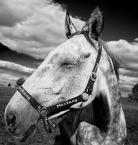"""carewna """"Mustang..."""" (2011-06-17 19:46:53) komentarzy: 4, ostatni: ezybus - zajemiło ;-) dzięki"""