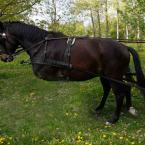 """silnik """"Konie"""" (2011-06-22 23:52:37) komentarzy: 12, ostatni: podoba mi sie twoje podejscie do fotografii,bardzo zdrowe .pzdr"""