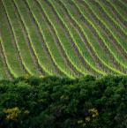 """asiasido """"winnice"""" (2011-06-24 09:58:27) komentarzy: 15, ostatni: Ciekawie z tymi krzaczkami...podoba się"""