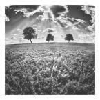 """konradmaciej """"drzewa trzy"""" (2011-07-01 15:59:04) komentarzy: 26, ostatni: ... moja Mamusia! :)"""
