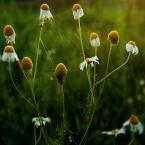 """Zeny """"z cyklu łąka"""" (2011-07-12 09:40:07) komentarzy: 22, ostatni: Bardzo mi się widzi to zdjęcie."""