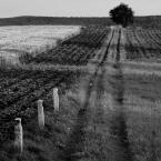 """Zeny """"Kielecczyzna"""" (2011-07-27 10:44:17) komentarzy: 52, ostatni: Black & Withe Prints[ 2011-09-05 17:07:00 ] Dziękuję..."""