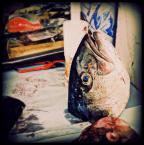 """agus35 """""""" (2011-08-02 00:56:02) komentarzy: 14, ostatni: przypomina mi się restauracja tuńczykowa, a foto zacne, zresztą dużo tu takich"""