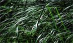 """barszczon """"łąka"""" (2011-08-06 00:21:09) komentarzy: 2, ostatni: :) trudno, jakoś sobie z tym poradzę :) dzięki za szczerość :)"""