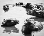 """wizental """"rogate grono"""" (2011-08-08 19:38:41) komentarzy: 3, ostatni: Pływanie synchroniczne"""