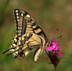 """Palestro """"Paź królowej"""" (2011-08-11 19:32:29) komentarzy: 10, ostatni: ładnie"""