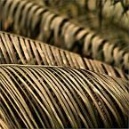 """barszczon """"inside oranżeria (9)"""" (2011-08-12 12:19:25) komentarzy: 1, ostatni: ciąg dalszy, dalszego ciągu"""