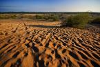 """K_rzychu """"pustynia..."""" (2011-08-29 21:55:17) komentarzy: 12, ostatni: Dobrze pokazane :)"""