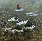 """artemski """"Z ukrycia..."""" (2011-09-06 19:32:17) komentarzy: 33, ostatni: śliczności:)"""
