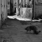 """Zeny """"z cyklu Bystrzyca Kłodzka"""" (2011-09-12 16:54:23) komentarzy: 49, ostatni: barani2[ 2012-05-12 23:48:49 ] Dzięki..."""
