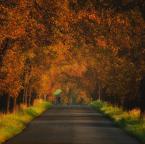"""Robertsoul """"Przyjedź jeszcze"""" (2011-09-17 11:49:06) komentarzy: 7, ostatni: Swiatełko"""
