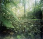 """invention """"* ( szemranieSwampa 2 )"""" (2011-09-21 12:55:15) komentarzy: 6, ostatni: Cudne leśne pomykania"""
