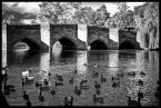 """kiloff jeden """"the North"""" (2011-09-25 12:09:07) komentarzy: 1, ostatni: prawie jak most w Avignon.. tylko ze tam jest pół mostu.. i nie było kaczek ;)"""
