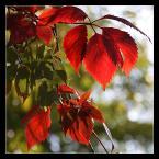 """Wojtek K. """"*****"""" (2011-09-29 07:51:14) komentarzy: 5, ostatni: A, jesień... lubię  :)"""