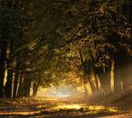 """Robertsoul """"Wpadając przez ...."""" (2011-10-01 13:10:08) komentarzy: 8, ostatni: Swiatełko"""