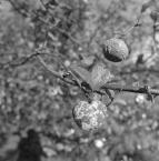 """irmi """""""" (2011-10-14 18:33:30) komentarzy: 1, ostatni: autoportret z jabłuszkami ;)"""