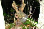 """asiasido """"Łoś z Kampinosu ;)))"""" (2011-10-16 11:46:18) komentarzy: 15, ostatni: super wyczajone"""