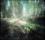 """invention """"* ( chlast supernowej w naturalnym środowisku Jożina )"""" (2011-10-20 12:01:08) komentarzy: 4, ostatni: halo! proszę się fotograficznie nie obijać , dawno nic nowego nie było"""