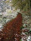 """Rickey """"Leśne dróżki"""" (2011-10-26 20:45:16) komentarzy: 1, ostatni: podoba mi się"""