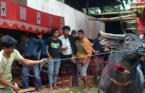 """foto-el """"Krew z Tana Toraja"""" (2011-10-27 19:38:00) komentarzy: 61, ostatni: ło Matko........"""