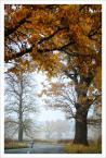 """paweljg """"""""Mały człowiek i drzewo"""""""" (2011-10-29 19:01:37) komentarzy: 3, ostatni: świetne ujecie, maleńki człowiek"""