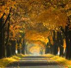 """Robertsoul """"Jesienną drogą"""" (2011-10-30 18:38:43) komentarzy: 41, ostatni: dobre jesienne"""