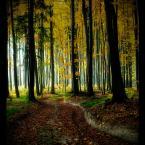 """amator_sliwek """"Spróbuj pokochać jesień"""" (2011-10-30 21:19:57) komentarzy: 18, ostatni: lubię"""