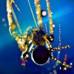 """V4 """"spider to ma klawe życie..."""" (2011-11-03 20:04:31) komentarzy: 10, ostatni: fajne"""