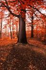 """Bonnie & Clyde """"...autumn deluxe...#1"""" (2011-11-05 06:04:06) komentarzy: 6, ostatni: właśnie ten kolor czy też wypranie z odcieni przyciąga, dla mnie ok"""