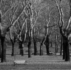 """m___m """"park"""" (2011-11-07 08:49:57) komentarzy: 19, ostatni: Ciekawa praca"""