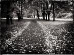 """Rickey """"po drodze..."""" (2011-11-07 18:20:11) komentarzy: 1, ostatni: kiepska perspektywa, kiepsko kadrowane"""