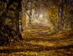 """maszu """"kolejna odsłona jesieni"""" (2011-11-09 20:23:55) komentarzy: 15, ostatni: Ale klimat..."""
